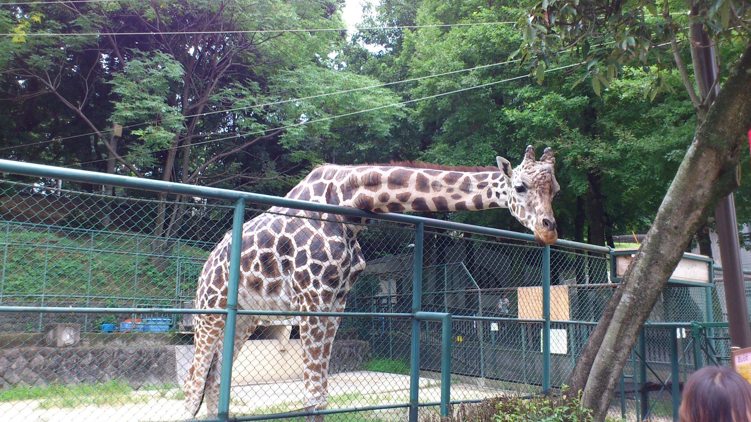 周辺施設(動物園)