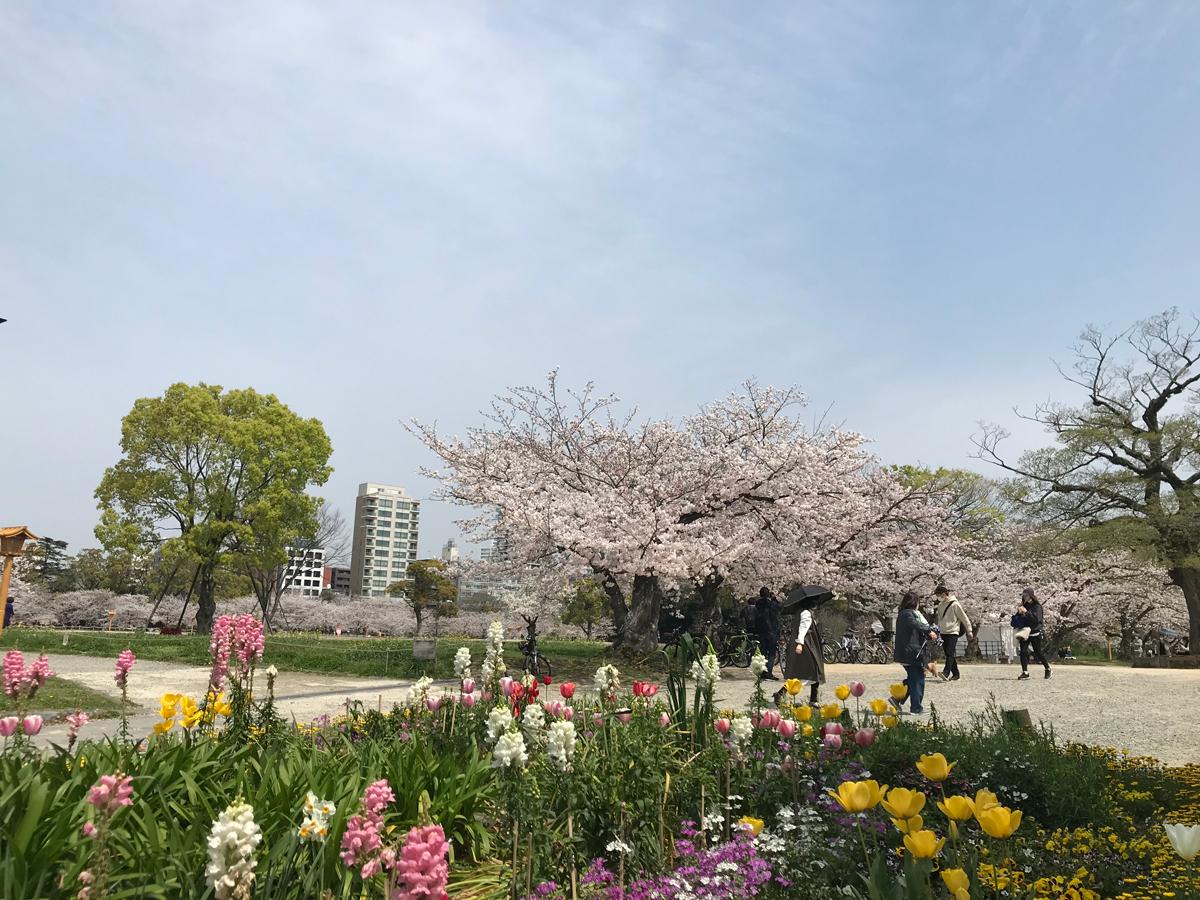 芝生に桜、ピクニックに最適な舞鶴公園